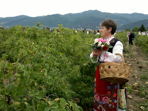 Photo. Southern Bulgaria,Rose Valley. Festival of the Roses. Rozober.